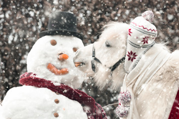 Winter004.jpg