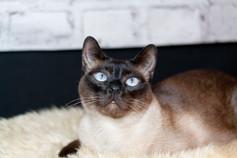 Katze114.jpg