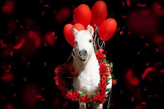 Valentinstagpony010.jpg