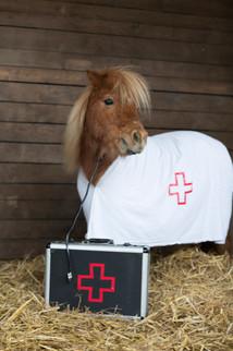 Dr.Pony010.jpg
