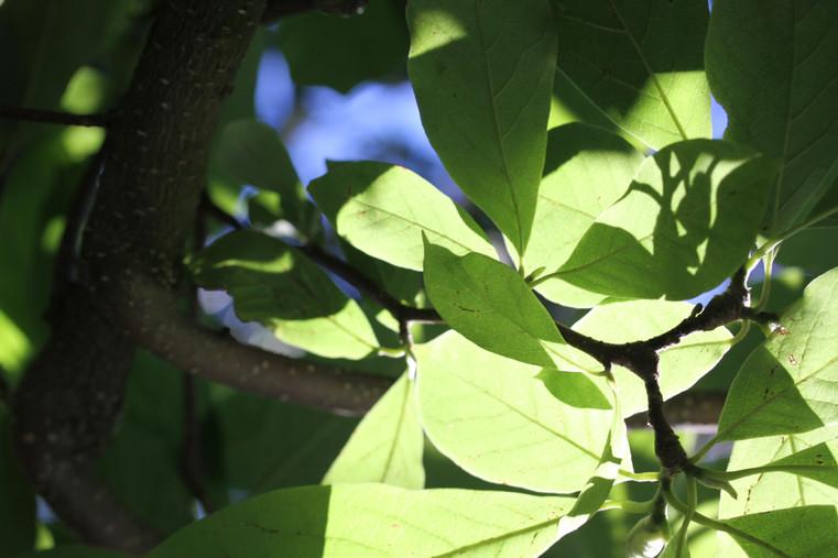 Natur44.jpg