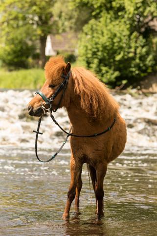 Pony153.jpg