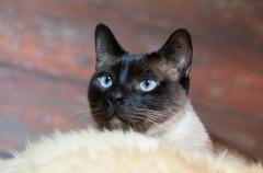 Katze116.jpg