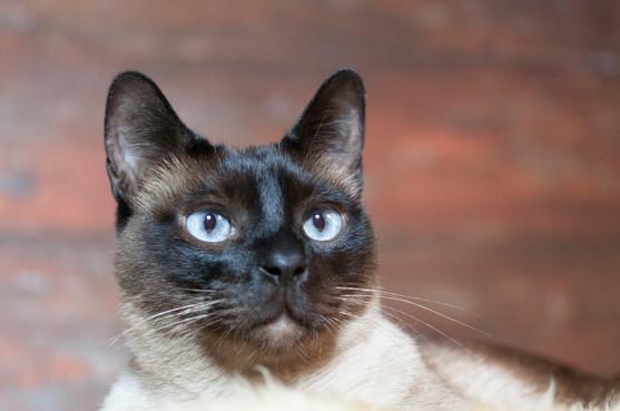 Katze122.jpg