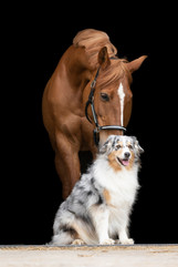 Hund_Pferd004.jpg