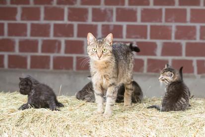 Katze97.jpg