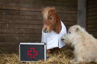 Dr.Pony025.jpg