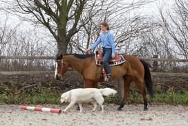 HorseDogTrail86.jpg
