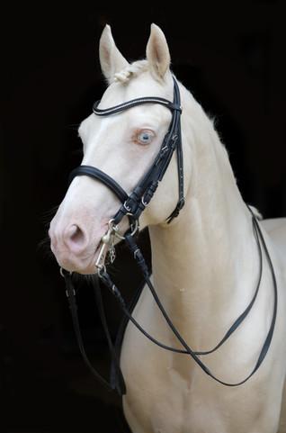 Ponyhengst16.jpg