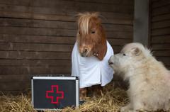 Dr.Pony024.jpg