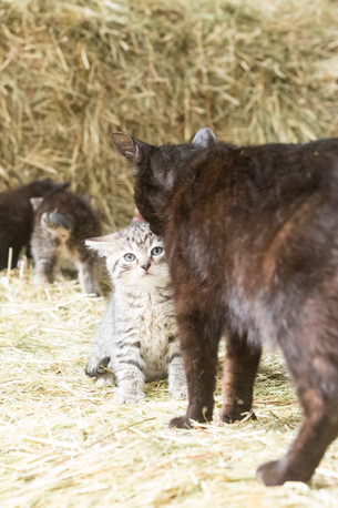 Katze103.jpg