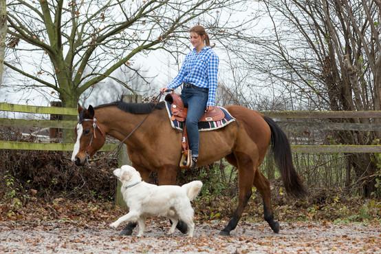 HorseDogTrail69.jpg