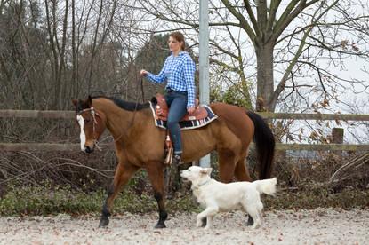 HorseDogTrail84.jpg