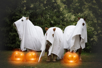 Halloween36.jpg