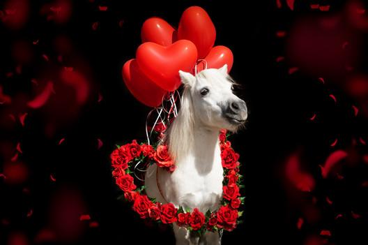 Valentinstagpony005.jpg