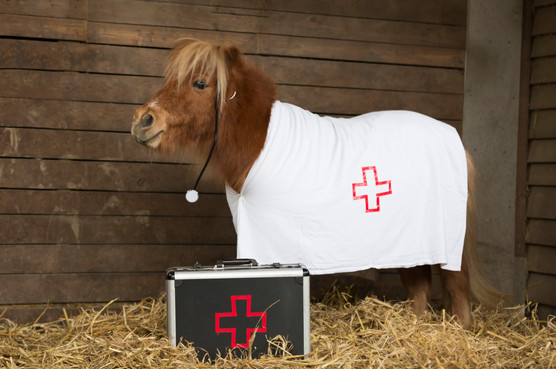 Dr.Pony003.jpg