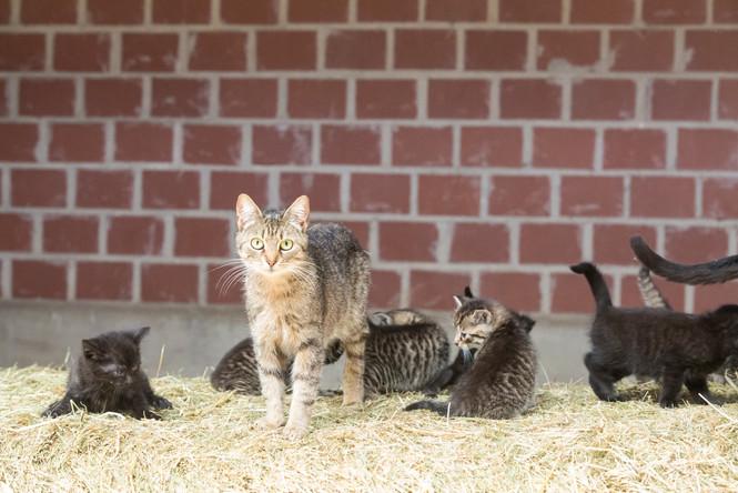 Katze98.jpg