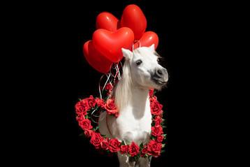 Valentinstagpony004.jpg