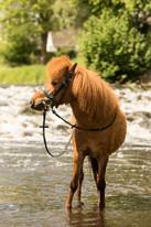 Pony152.jpg
