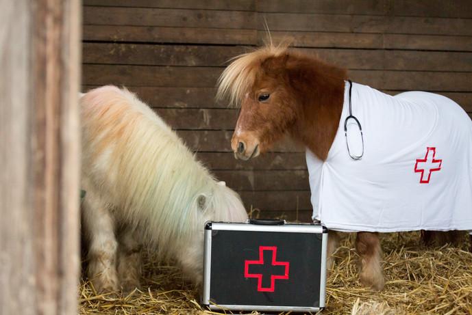 Dr.Pony033.jpg