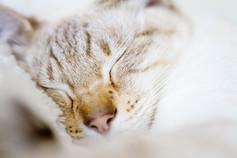 Katze57.jpg
