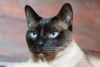 Katze121.jpg