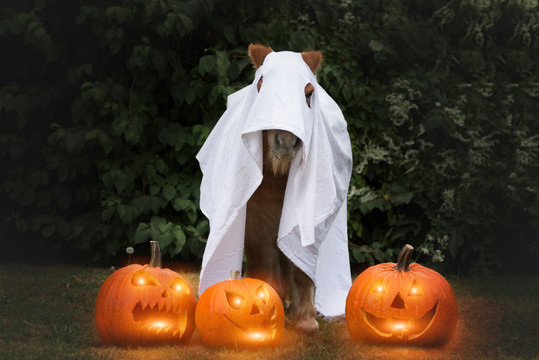 Halloween33.jpg