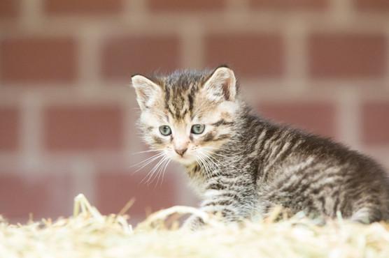 Katze105.jpg