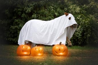 Halloween35.jpg