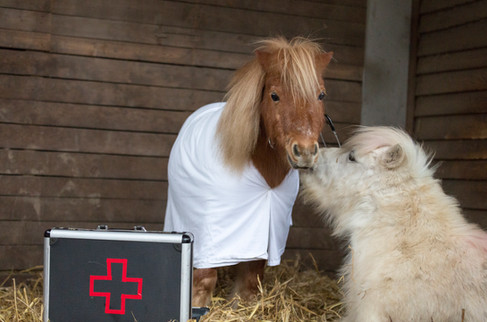 Dr.Pony021.jpg