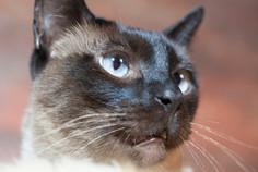 Katze118.jpg