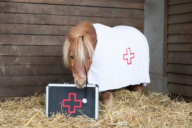 Dr.Pony008.jpg