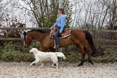 HorseDogTrail76.jpg
