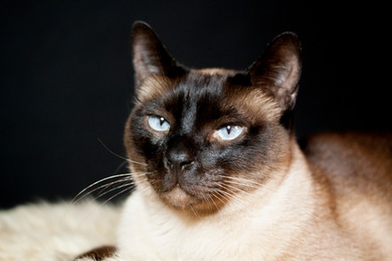 Katze113.jpg