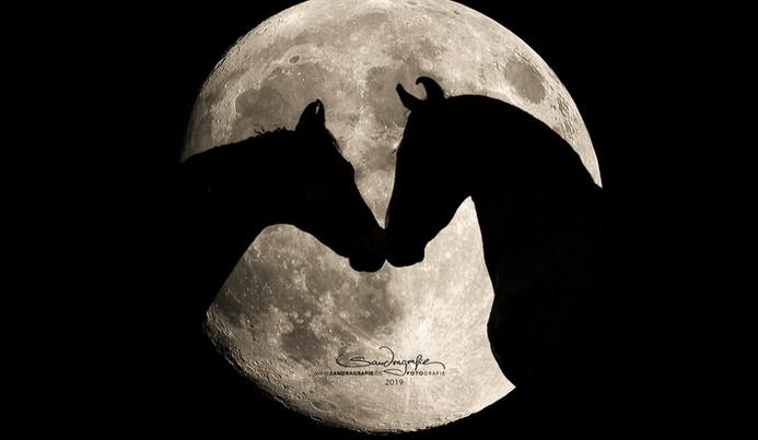 Mond2_FB Kopie.jpg