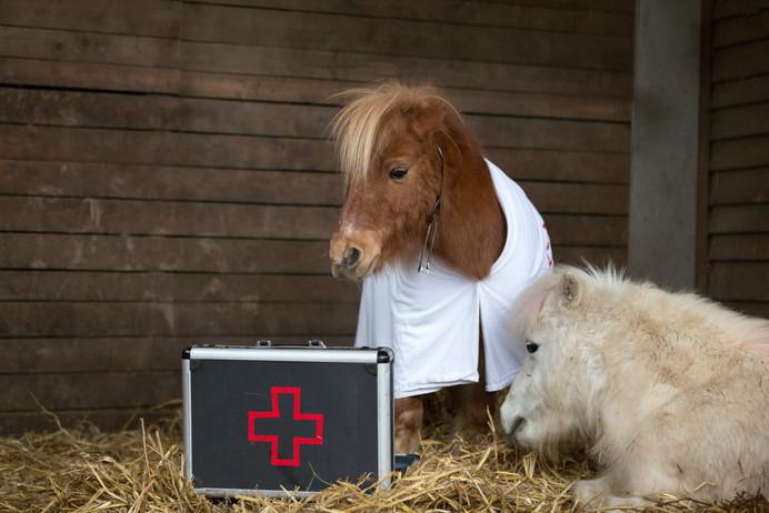 Dr.Pony027.jpg