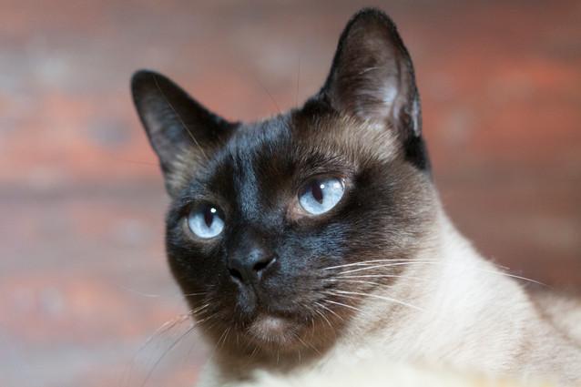 Katze124.jpg