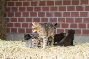Katze101.jpg