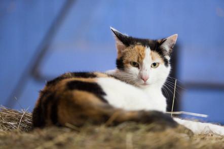 Katze110.jpg