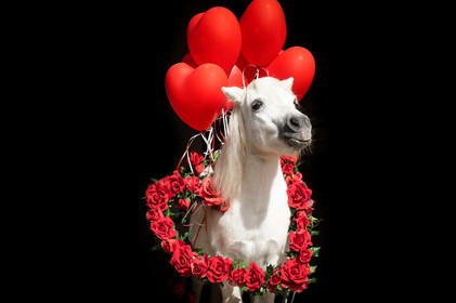 Valentinstagpony011.jpg