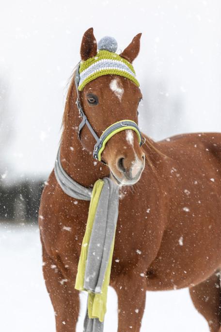 Schnee001.jpg