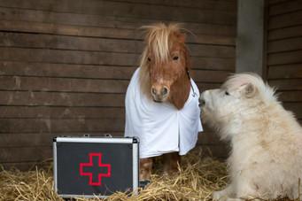 Dr.Pony023.jpg