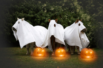 Halloween37.jpg