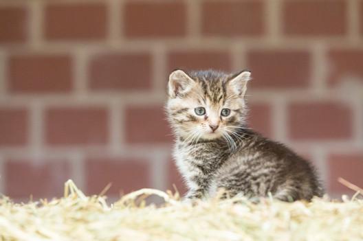 Katze107.jpg