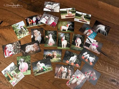 Pony Postkarten Set 25 Motive
