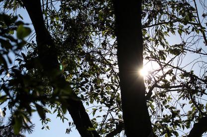 Natur41.jpg