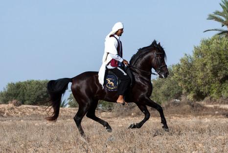 Berber101.jpg