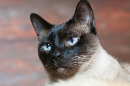 Katze123.jpg