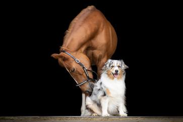 Hund_Pferd005.jpg