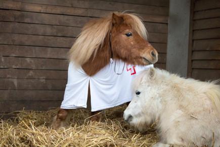 Dr.Pony019.jpg